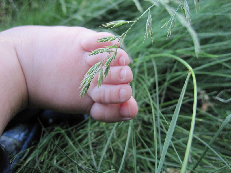 Toesinthegrass