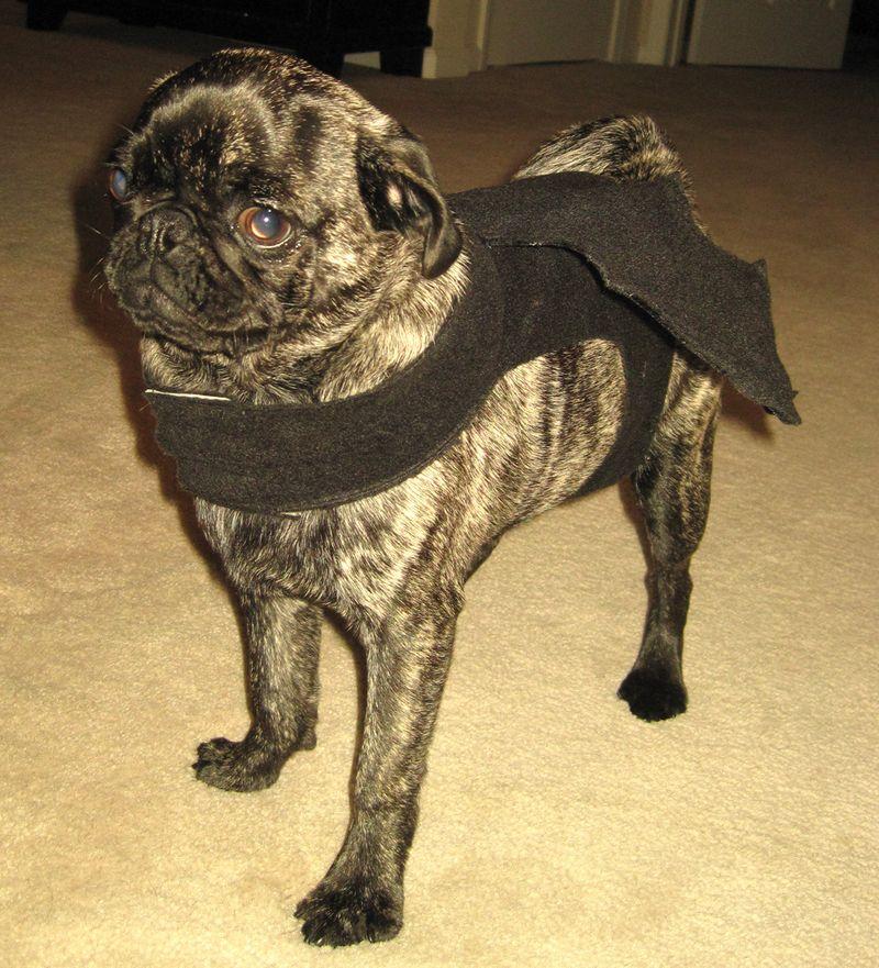 Batdog2