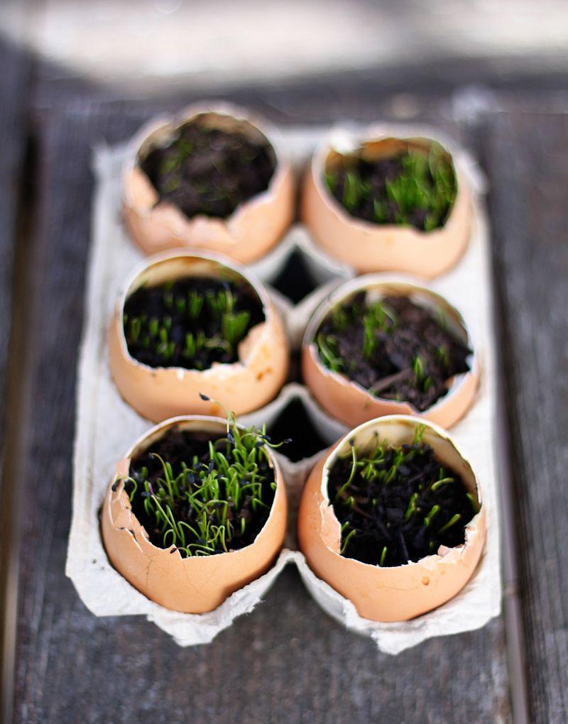 Eggseedlings2