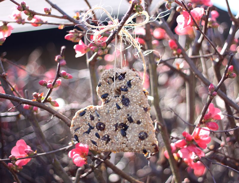 Bird seed cookie