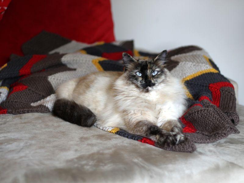 Kitty loves handknit