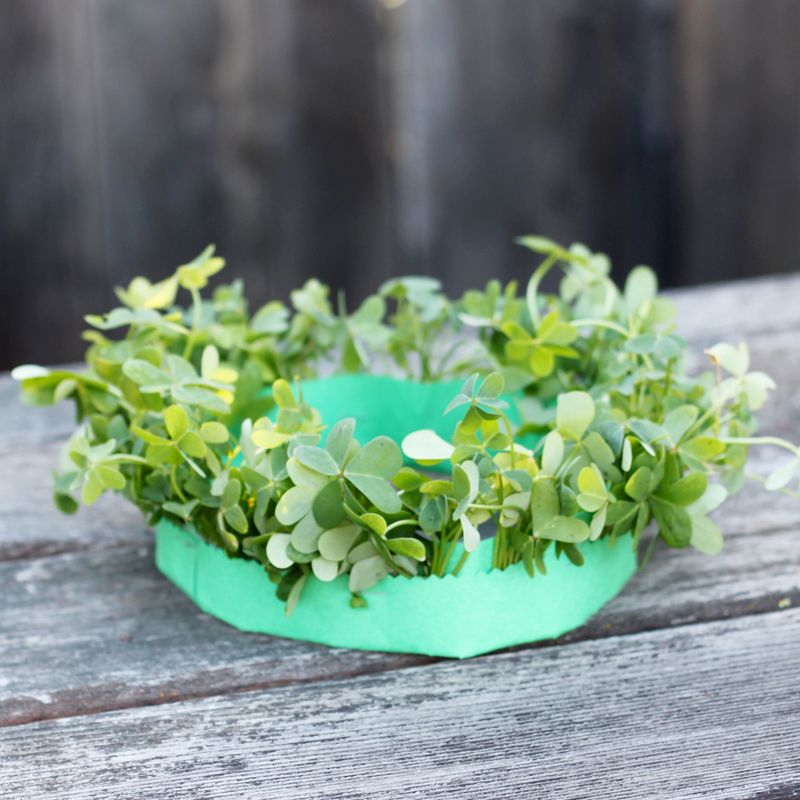 Diy clover crown