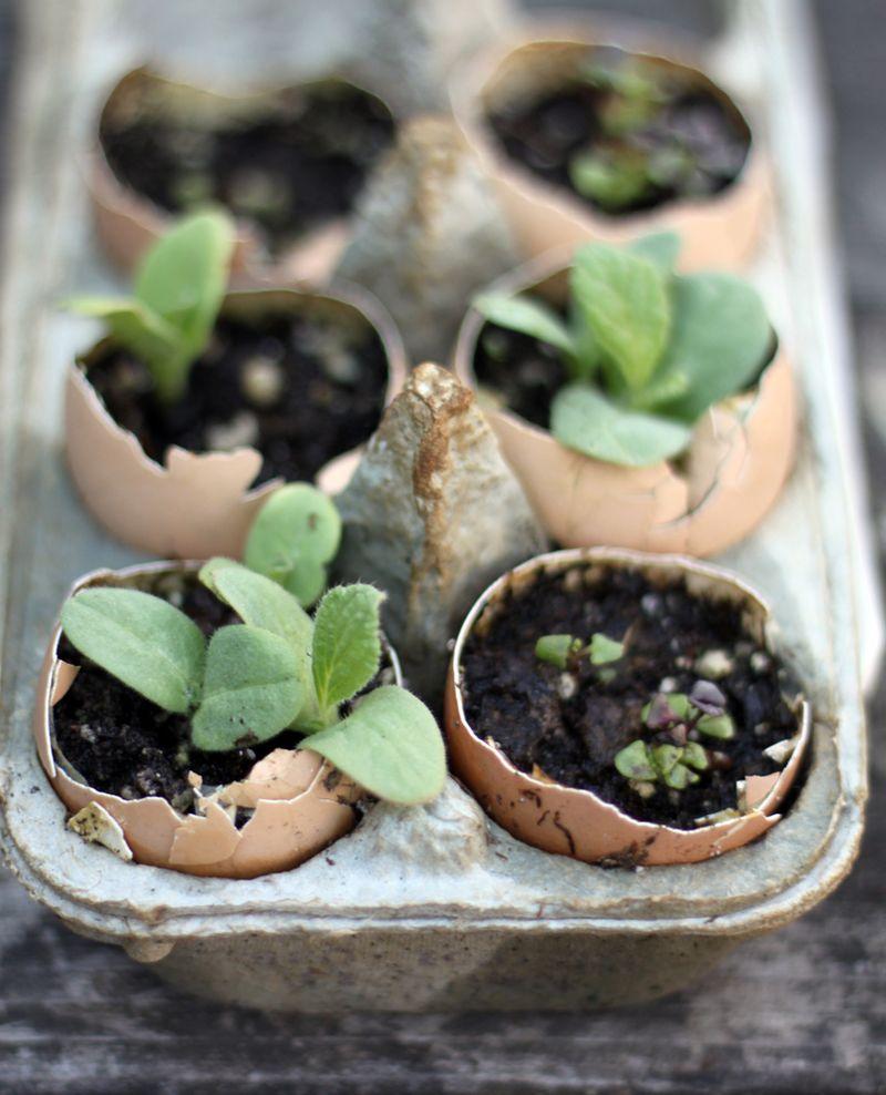Sow-seeds-in-eggshells