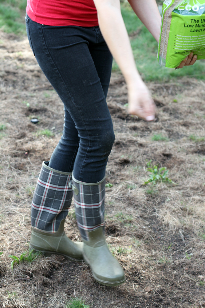 Sowing-eco-lawn-seed