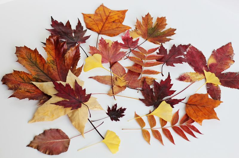 Easy way to preserve fall leaves