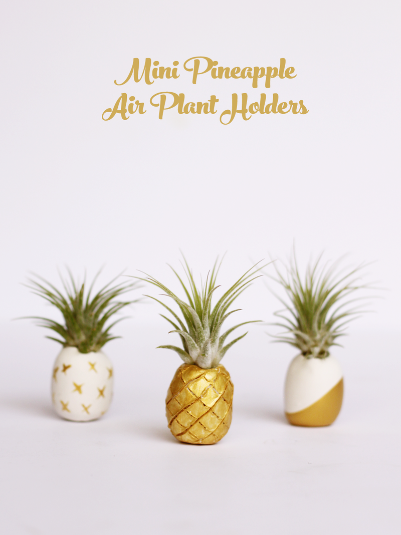 Mini pineapple air plant holders