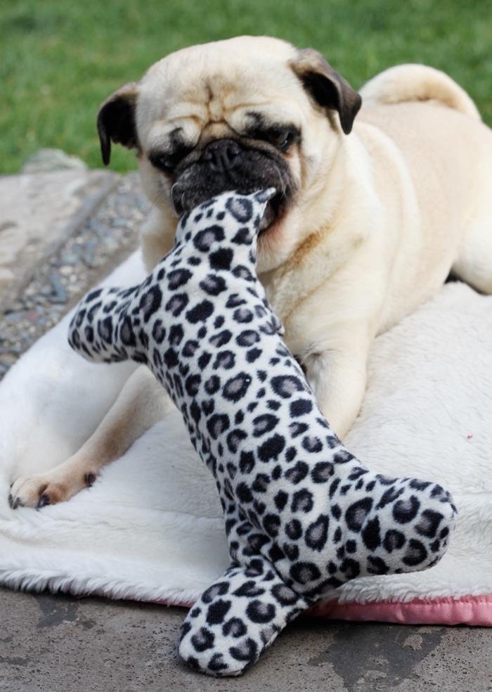 Fun diy dog toy