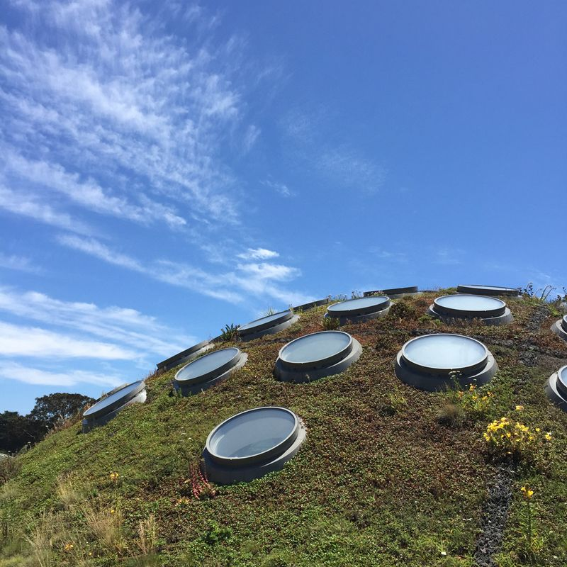 Living roof at cal academy