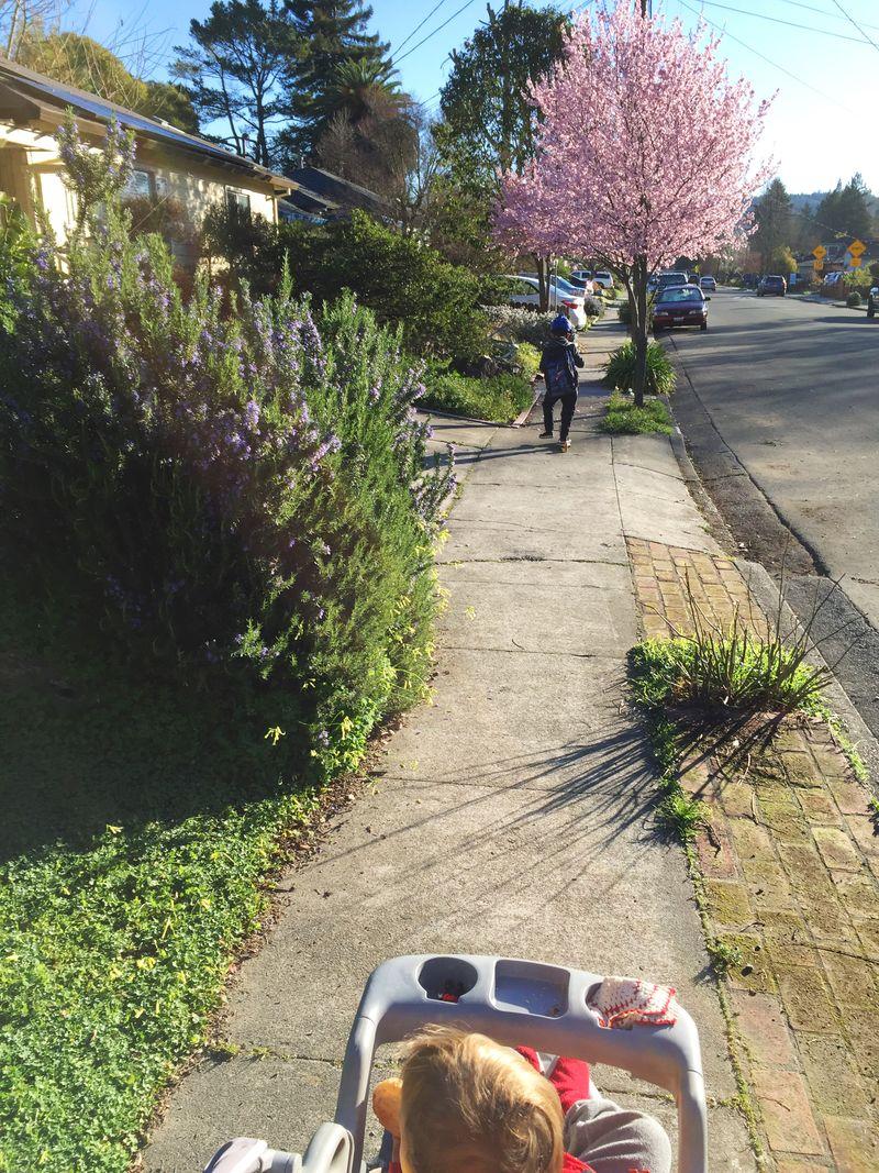 The benefits of walking to school