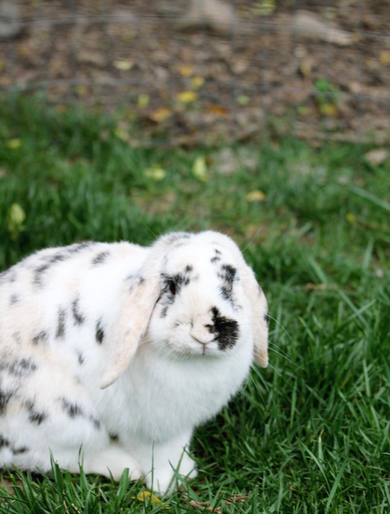 Oustide bunny