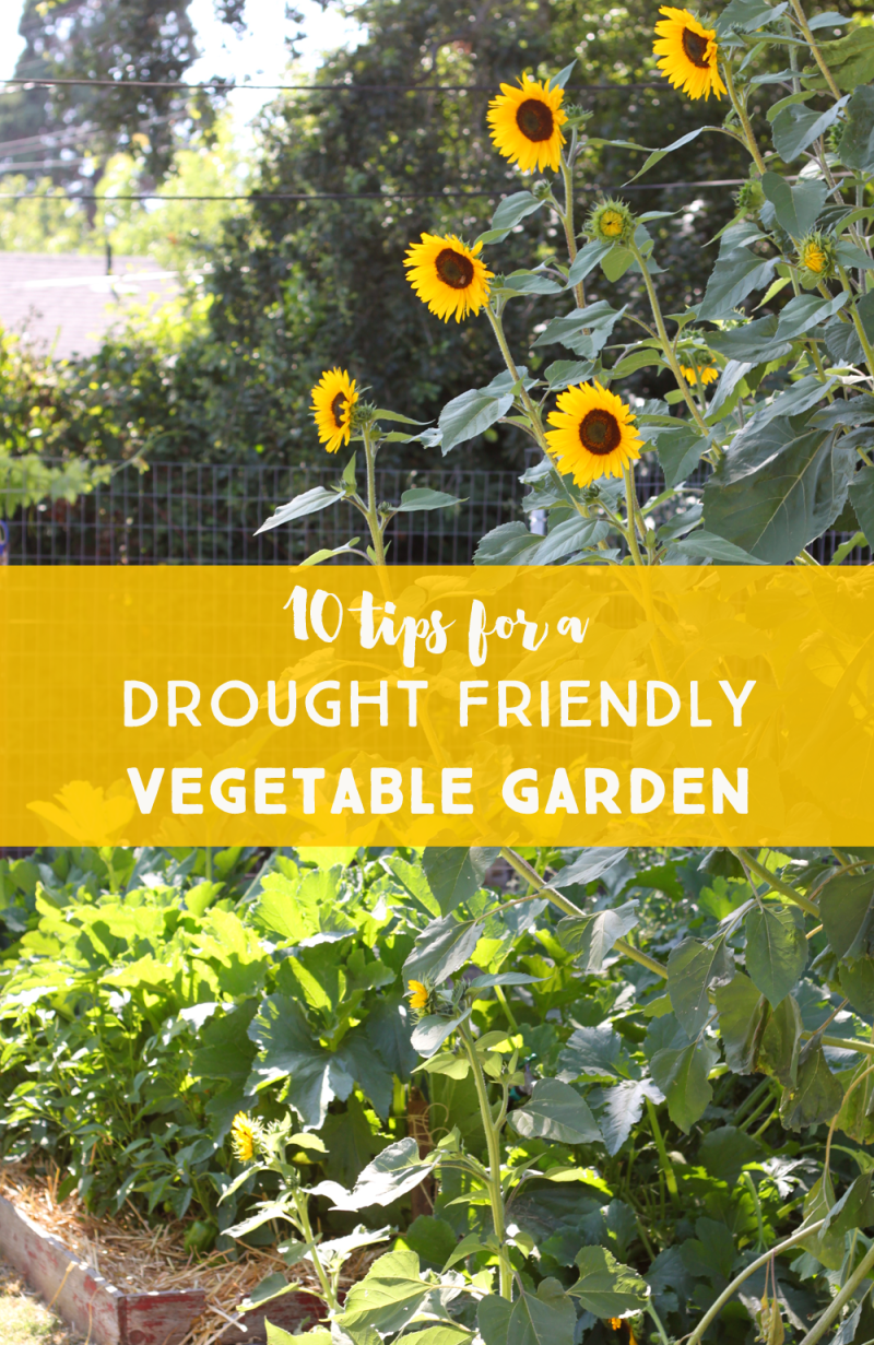 Drought friendly vegetable garden