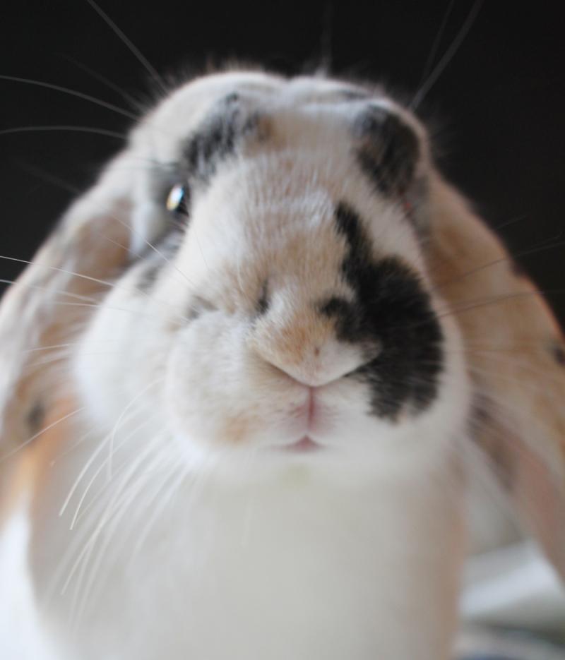 Eva bunny