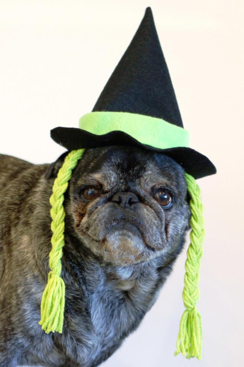 DIY pet witch hat