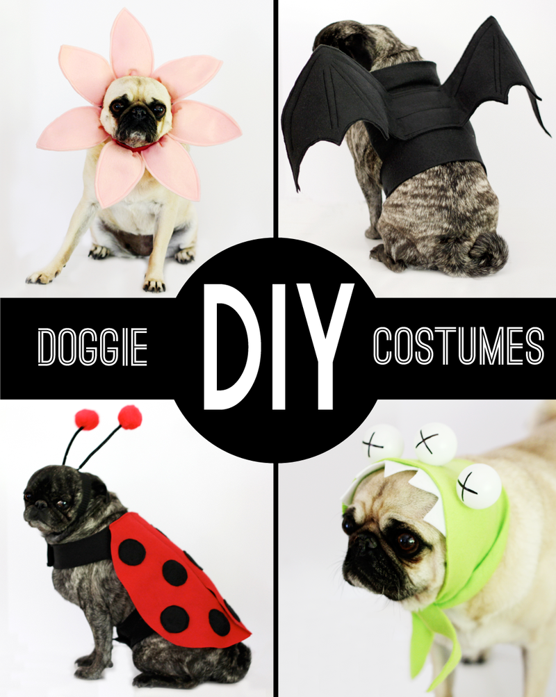 Diy-dog-costumes