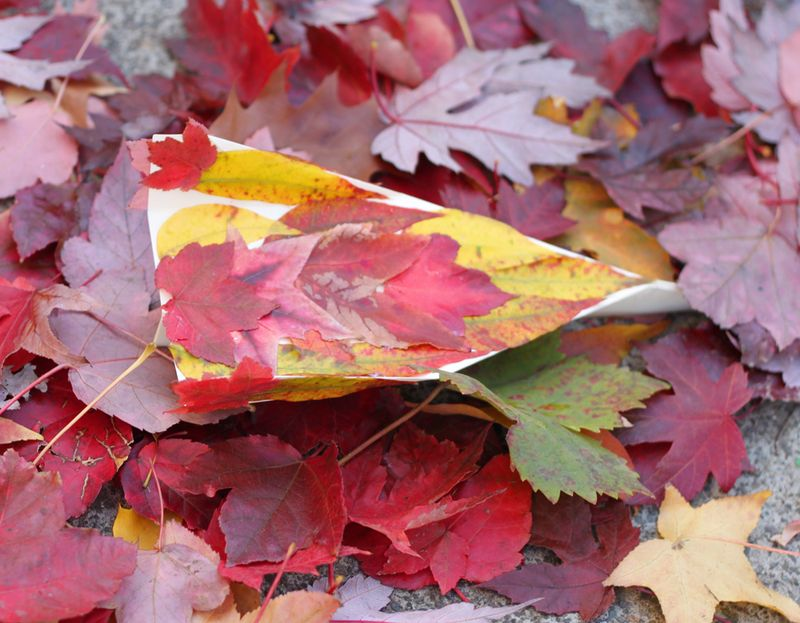Fall kid craft